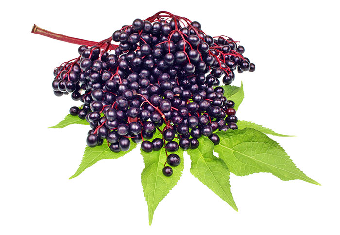 elderberry-remedy-flu