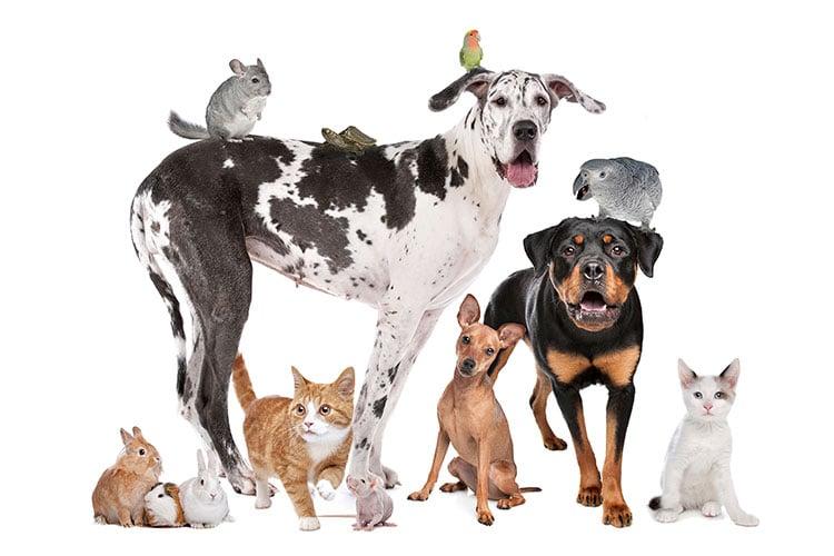 pet-medications-dog-cat-flea-treatment-heartworm-medicine-compounded-medication-for-pets-pure-life-pharmacy-alabama