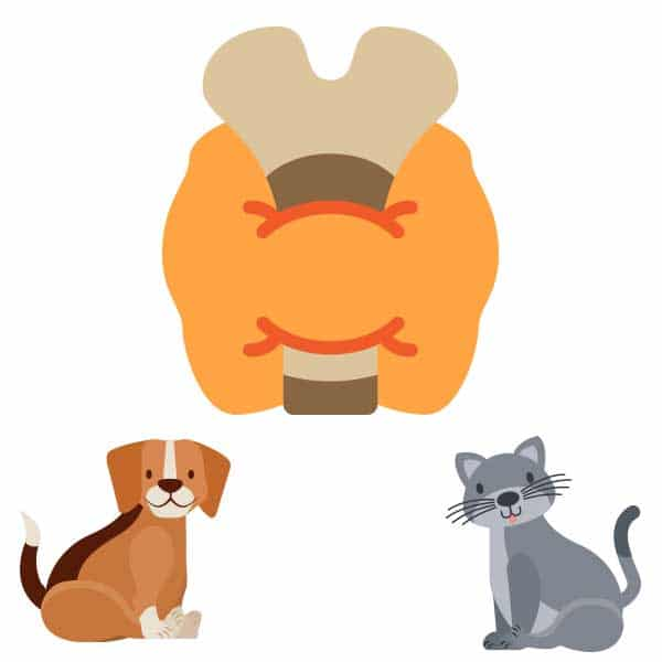 compounded-pet-medications-thyroid-medications-pure-life-pharmacy-foley-alabama