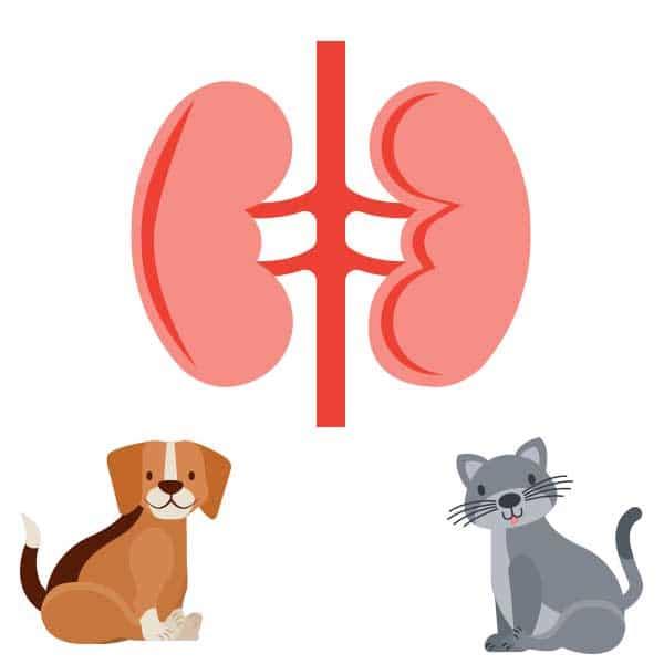 compounded-pet-medications-bladder-kidney-medications-pure-life-pharmacy-foley-alabama