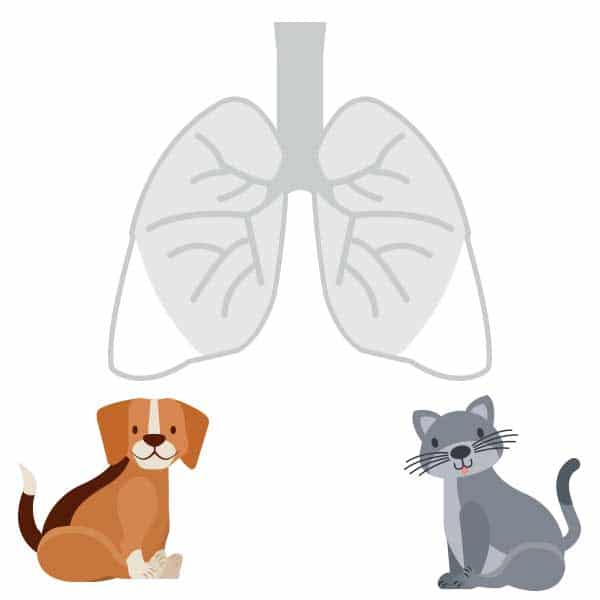 compounded-pet-medications-respiratory-allergy-medications-pure-life-pharmacy-foley-alabama